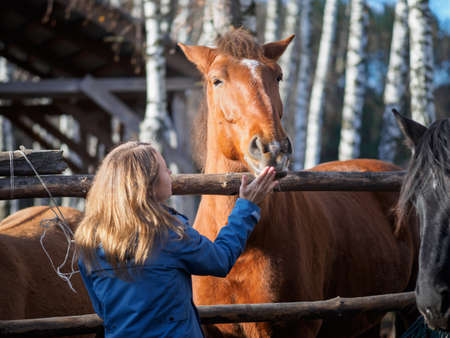 The girl touches the horse's face in the aviary.