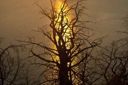The last rays of light from the setting sun reflect in the lake behind a leafless tree Stock Photo - 14953251