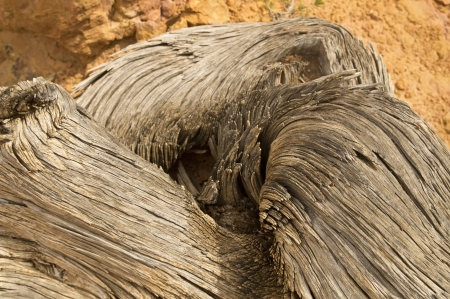 Closeup of a textured swirling pattern on an ancient tree photo