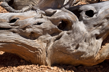 Close up a gnarled, twisted and tortured tree stump photo
