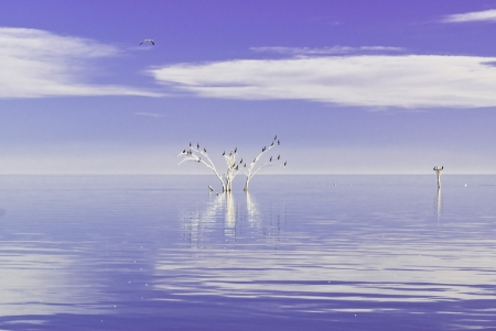 seabirds: A mystical view of California s remote Salton Sea with seabirds perching on a dead tree