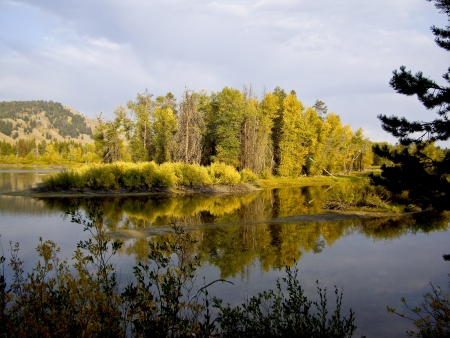 Autumn sunlight glistens on foliage along the Snake River near Jackson Hole Wyoming photo