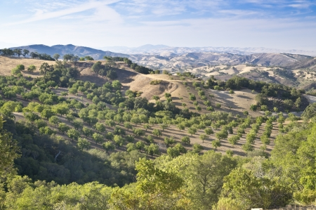 View of the rolling hils of Paso Robles famous wine country in California Stock Photo