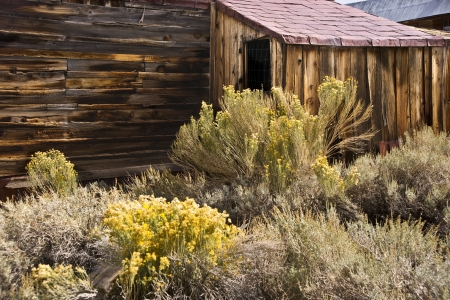 Authentic western building and high desert shrubs at agold mining ghost town