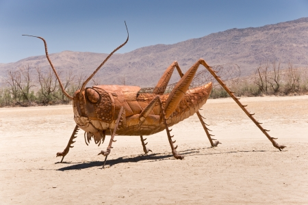 the fittest: Borrego Springs, California - June 25, 2012  Artist Ricardo A  Breceda has added a giant grasshopper sculpture to the collection of prehistoric animals on permanent display at Galetta Meadows