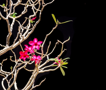 brilliantly: Exotic oriental style composition of a stark, leafless tree with brilliantly colored flowers  Stock Photo