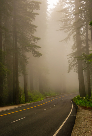 disappears: A road disappears into the fog in Redwoods National Park in Northern California. Stock Photo