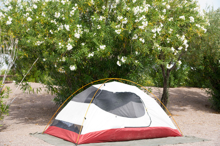 campground: A tent at a desrt campground in Nevada surrounded by oleander trees.