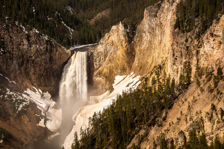 runoff: Spring run-off cascades over the lower falls of the yellowstone River with ice and snow along the canyon.