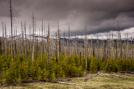 Storm clouds over Mt. Washburn in Yellowstone Park. Stock Photo
