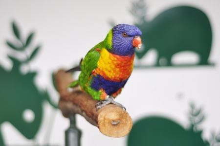 colorful: Colorful vibrant bird.