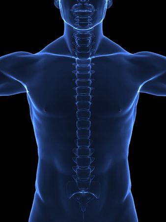 chest x ray: Corpo umano con visibile della colonna vertebrale - vista frontale