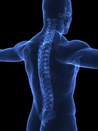 columna vertebral: Cuerpo humano con visible espina - vista a la derecha