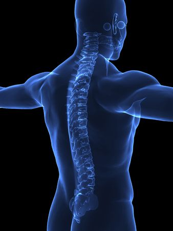 spine surgery: Human body with visible spine - right view