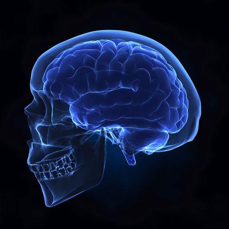 cerebro humano: Cerebro humano de X-ray