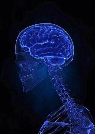 organos internos: Vista izquierda del cerebro humano X-ray  Foto de archivo