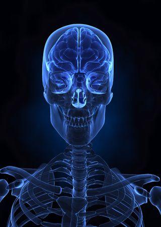 Human brain top view photo