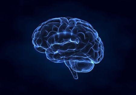 blue brain: Human brain left view