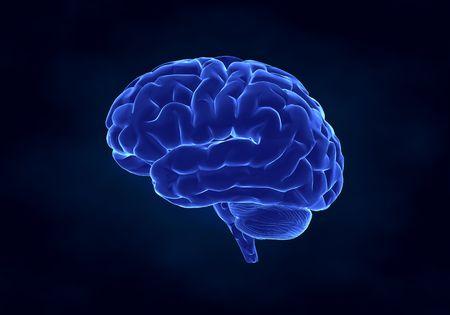 healthy brain: X- ray human brain
