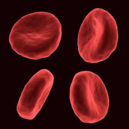 celulas humanas: Cuatro c�lulas humanas de la sangre en diferentes posiciones Foto de archivo