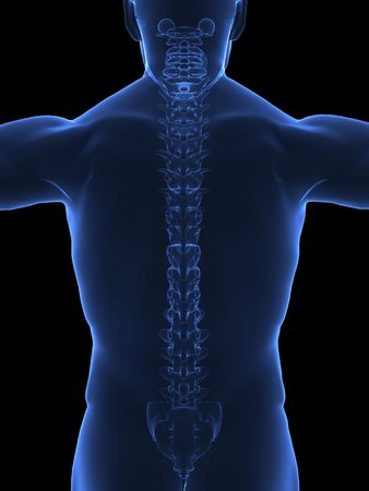 Human body with visible spine - back view photo