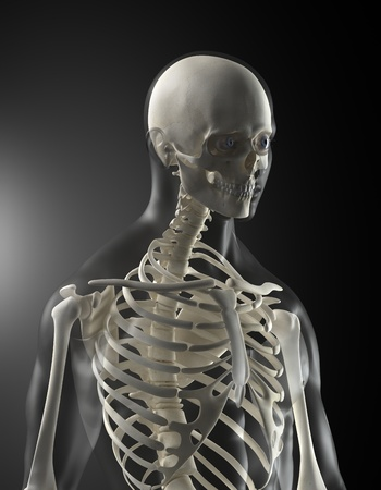 chest x ray: Human Body Medical Scan