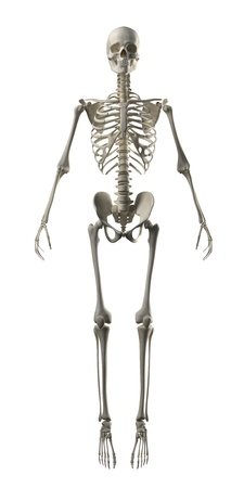 skeleton skull: Full Frontal Skeleton Stock Photo
