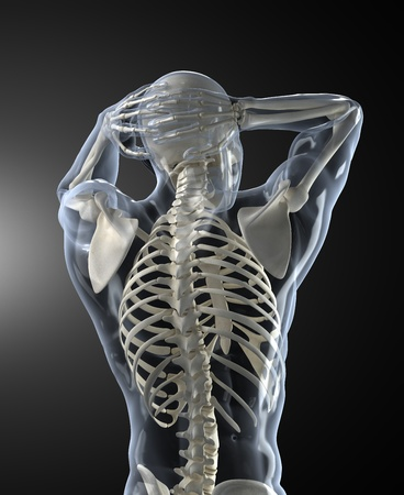 skeletal: Human Body Medical Scan back view