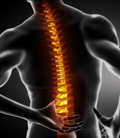 columna vertebral: An�lisis de columna vertebral de cuerpo masculino