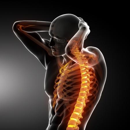 back bone: Male Body Backbone Scan Stock Photo