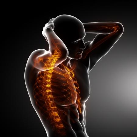 vertebra: Male Body Backbone Scan Stock Photo