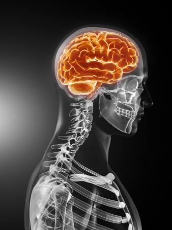 enfermedades mentales: An�lisis m�dicos de cerebro humano Foto de archivo