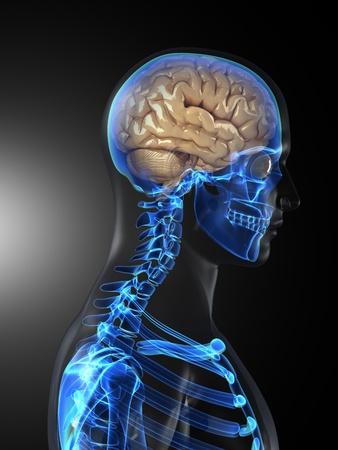 cerebro humano: An�lisis m�dicos de cerebro humano Foto de archivo