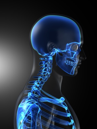 skeleton x ray: Human Skeleton Medical Scan