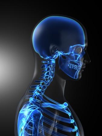 Scan médicale de squelette humain