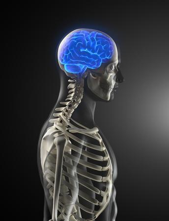 Human Brain Medical Scan photo