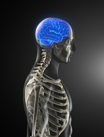 cancer x ray: Human Brain Medical Scan