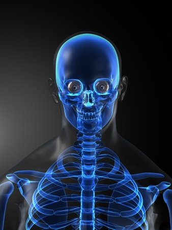 Human Skeleton Medical Scan photo