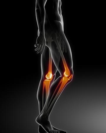 bone health: Human Knee Medical Scan
