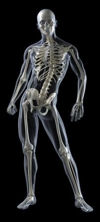 partes del cuerpo humano: An�lisis m�dicos de cuerpo humano