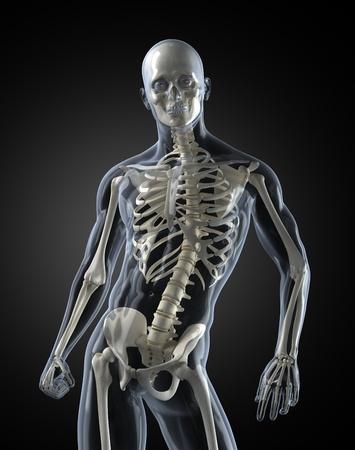 Human Body Medical Scan photo