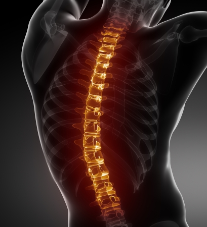 human spine: Male Body Backbone Scan Stock Photo