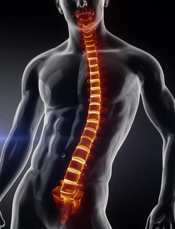 backbone: Male Body Backbone Scan Stock Photo