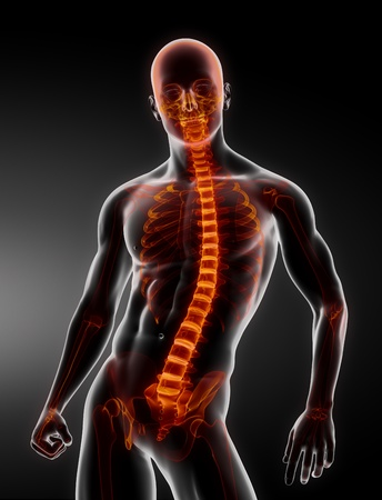 Male Body Backbone Scan Stock Photo - 9162849