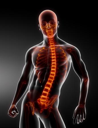 Male Body Backbone Scan Stock Photo - 9162849
