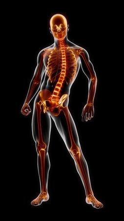 Menschliche vollständige Skelett medizinische Scan Standard-Bild - 9162818