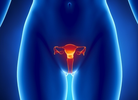 utero: Vista anteriore di utero, ovaie, tube uterine, cervice.