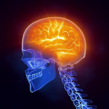 cat scan: Glowing brain inside skull