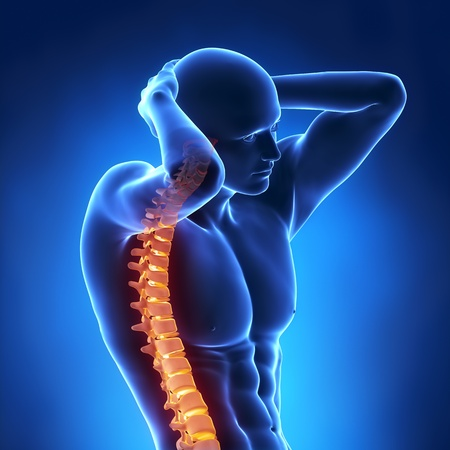 columna vertebral: Columna brillante dentro de cuerpo humano Foto de archivo