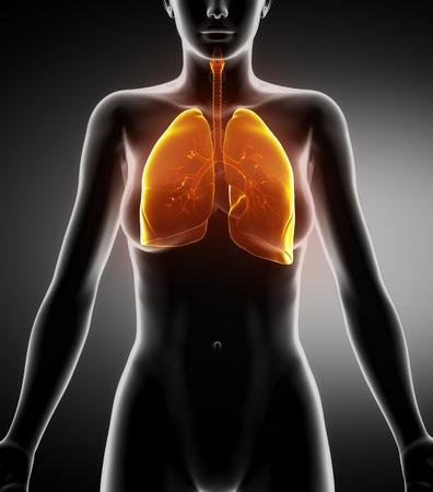 aparato respiratorio: Mujer en anatom�a permanente vista de rayos x de posici�n